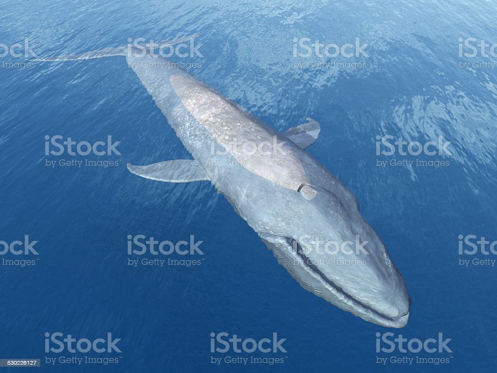 Blue Whale stock photo