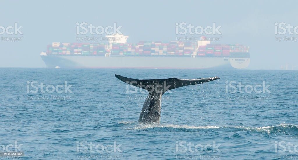 Синий кит стоковое фото