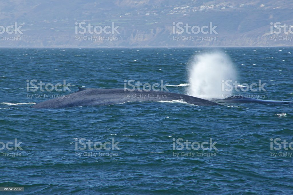 Blue Whale Anmelden