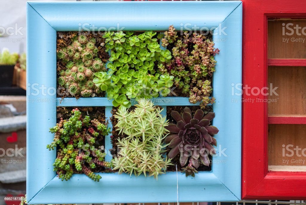 Blue window frame planted with plants stock photo
