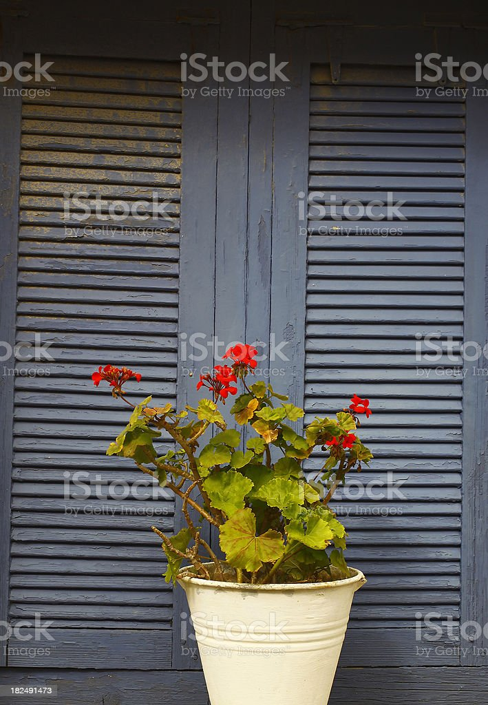 Blue window with flower royalty-free stock photo
