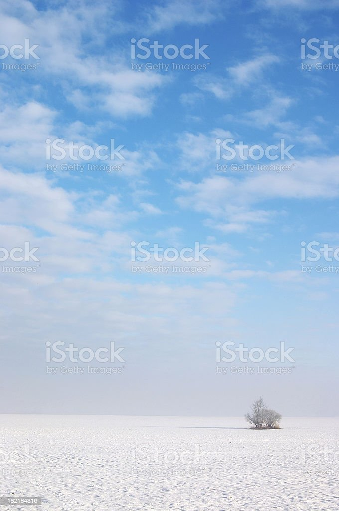Blue winter and bush royalty-free stock photo