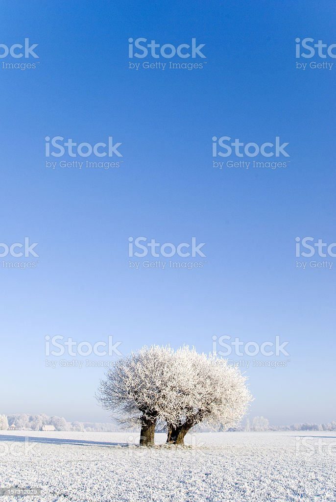 Blue winter day royalty-free stock photo