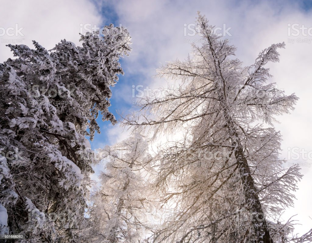 Blue winter sky over the forest stock photo