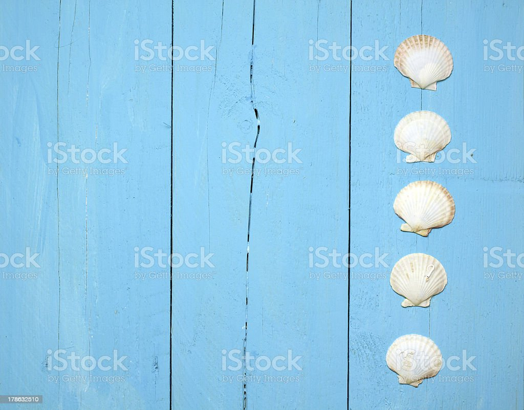 A blue wood wall with a line of seashells stock photo