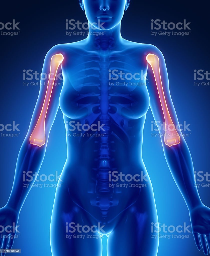 HUMERUS blue x--ray bone scan stock photo
