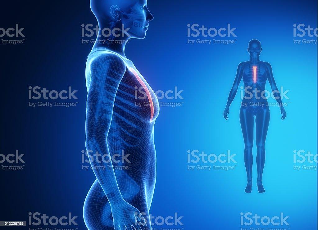 Fotografía de Esternón Azul Xray Gammagrafía ósea y más banco de ...