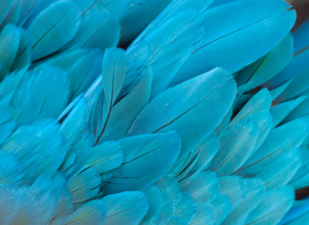 Blueandyellow macaw feathers in close range picture id854110602?b=1&k=6&m=854110602&s=612x612&w=0&h=bhjjwqspipnrpjhbnr3prvktnspd rc3 z4izyzcug0=