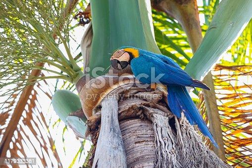 Endangered tropical bird in natural habitat