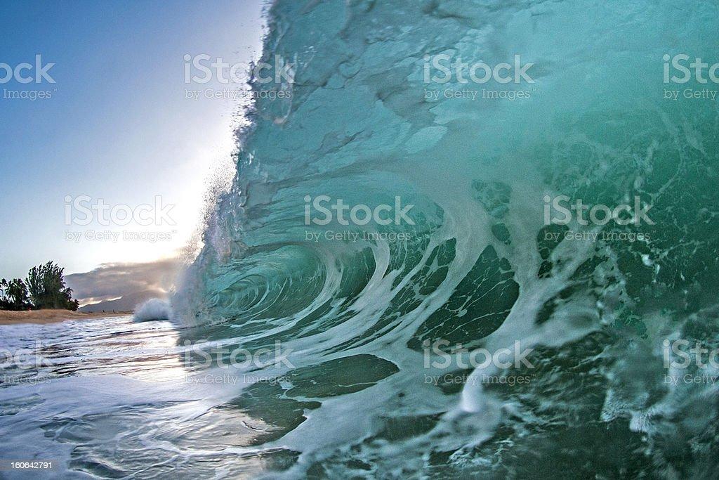 Blueback Smash stock photo