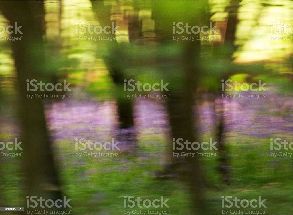 Bluebell Dream royalty-free stock photo