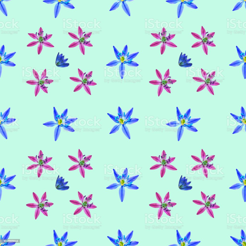 Bluebell, scilla, primroses. Seamless pattern texture of flowers. Floral background, photo collage stock photo