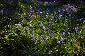 bluebell abstract flower pattern wild flowers growing