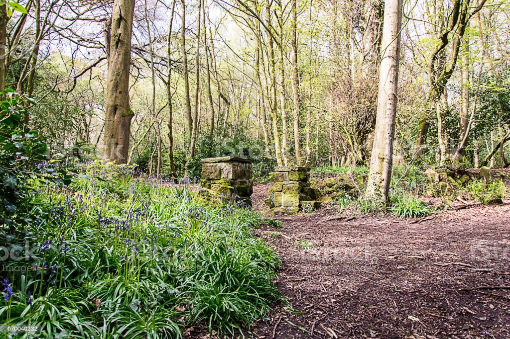 Bluebell Wood - Eastham Country Park stock photo