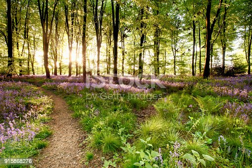 istock Bluebell woods with birds flocking 915868276