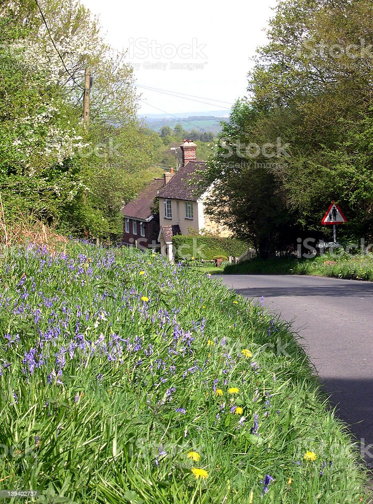 Bluebells, Ashdown Forest, East Sussex stock photo