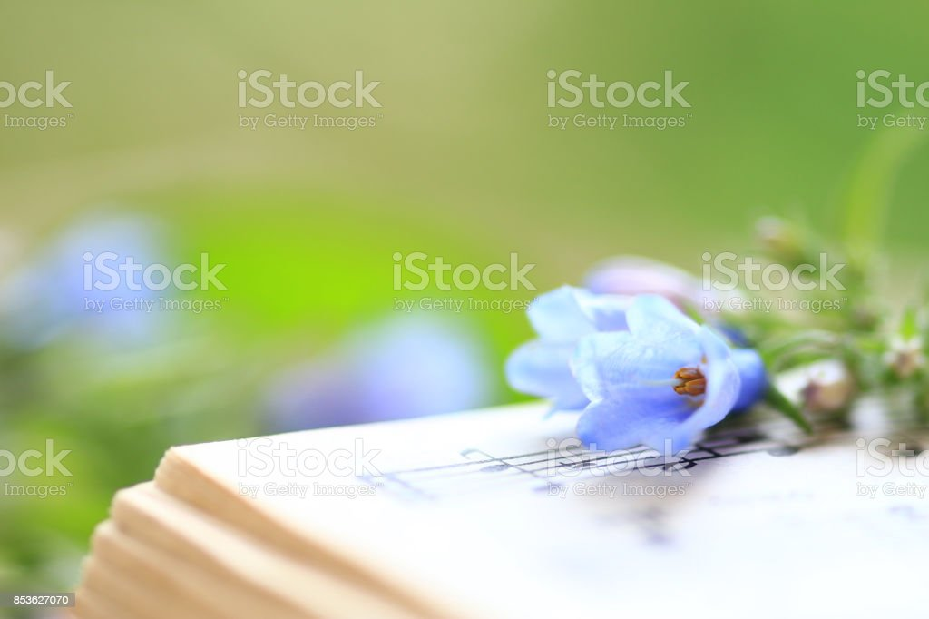 Bluebells displayed on musical notes stock photo