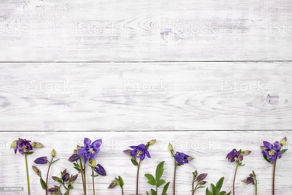 Bluebells flowers on white wooden table top view copy space stock bluebells flowers on white wooden table top view copy space royalty free mightylinksfo