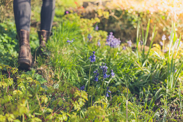 Bluebells growing in forest with person in background stock photo