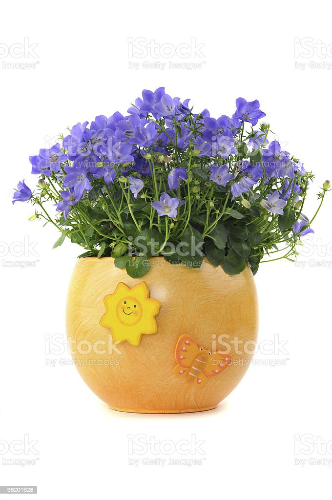 Bluebells in a Flower Pot royalty-free stock photo