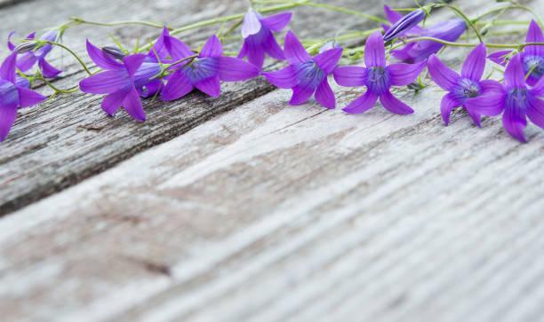 Glockenblumen auf alten Holztisch. Jahrgang Blumen Hintergrund. Textfreiraum – Foto