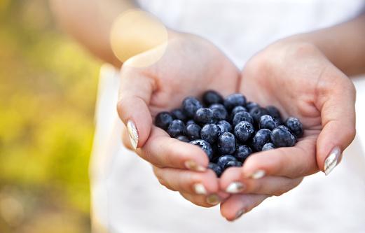 istock Blueberries in the hands of farmers, women's hands. Fruits, berries, food, nature 919548896