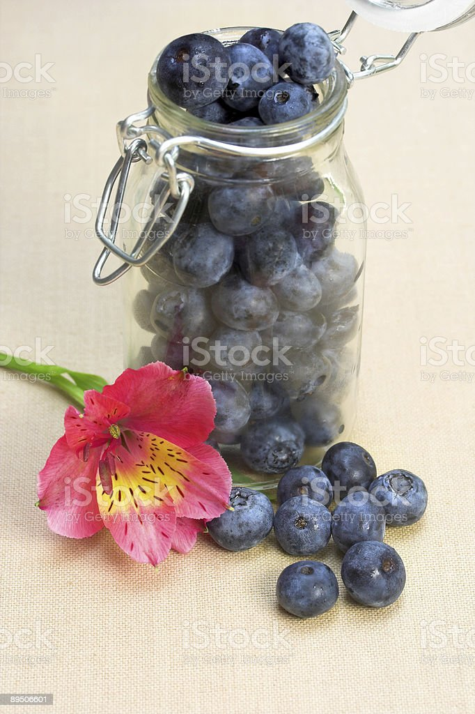 Blueberries lily flower royalty-free stock photo