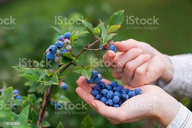 Blueberries Stockfoto en meer beelden van Antioxidant