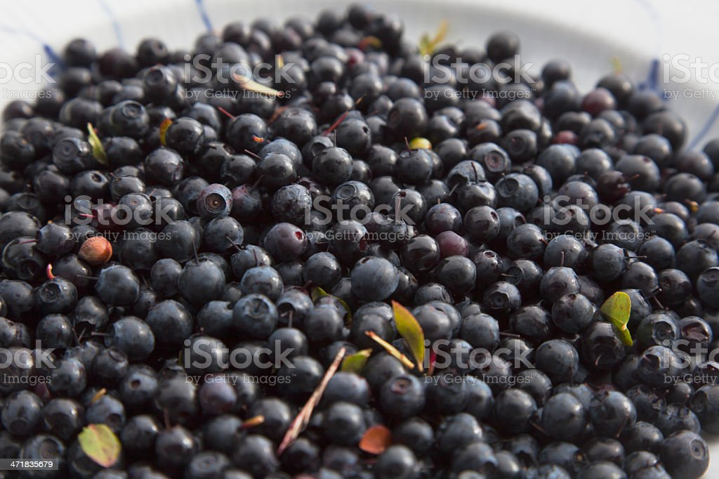 Blueberries. royalty-free stock photo