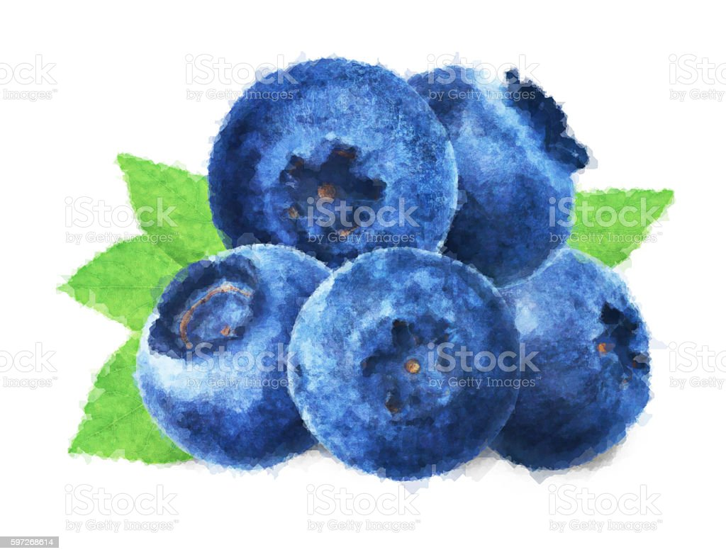 Blueberries watercolor with green leaves on white background Lizenzfreies stock-foto