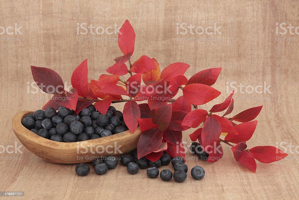 Blueberry Beauty royalty-free stock photo