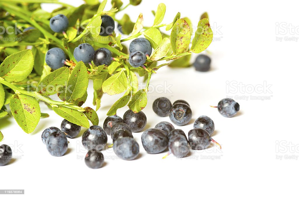Blueberry bunch stock photo