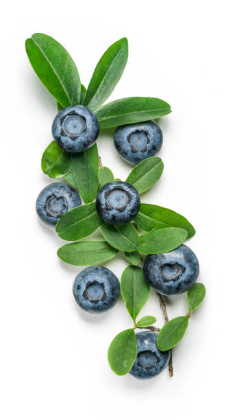blueberry bushes, leaves close up, organic blueberry, healthy eating, ripe blueberries, fresh blueberries, basket stock photo
