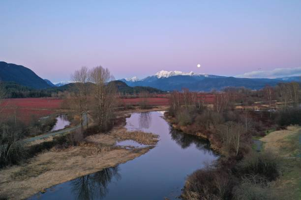 blueberry fields and golden ears mountain at Sunset  in winter stock photo