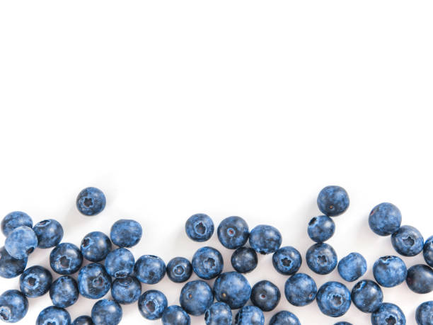 blåbär isolerad, vit, kopierings utrymme - blåbär bildbanksfoton och bilder