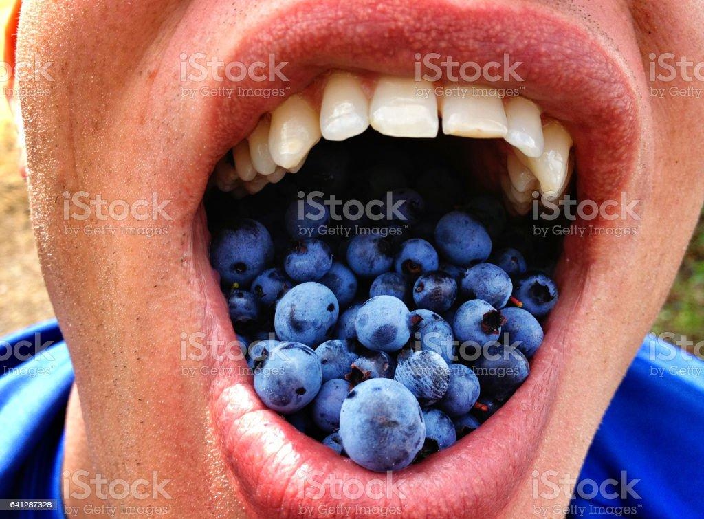 blueberry mouthful – Foto