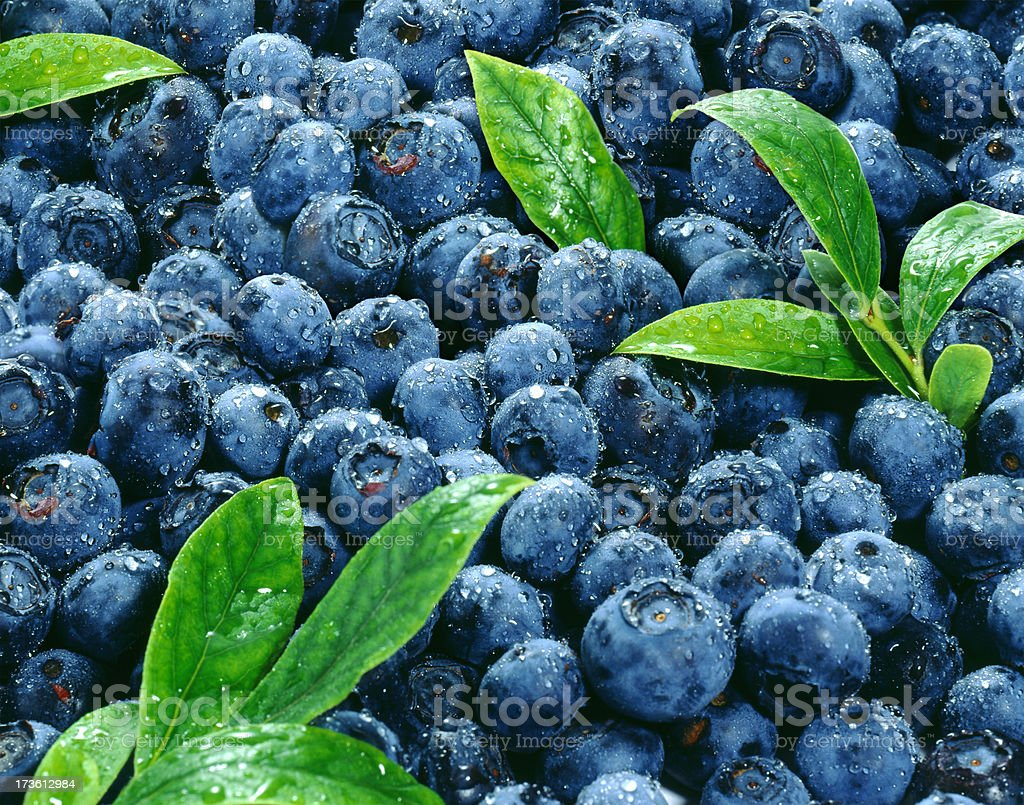 Blueberry wallpaper with Leafs royalty-free stock photo
