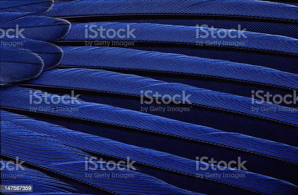 Bluebird wing picture id147567359?b=1&k=6&m=147567359&s=612x612&h=dypoanicnesxnww7065c4beemx1a6jwwa9gnobjn5b8=