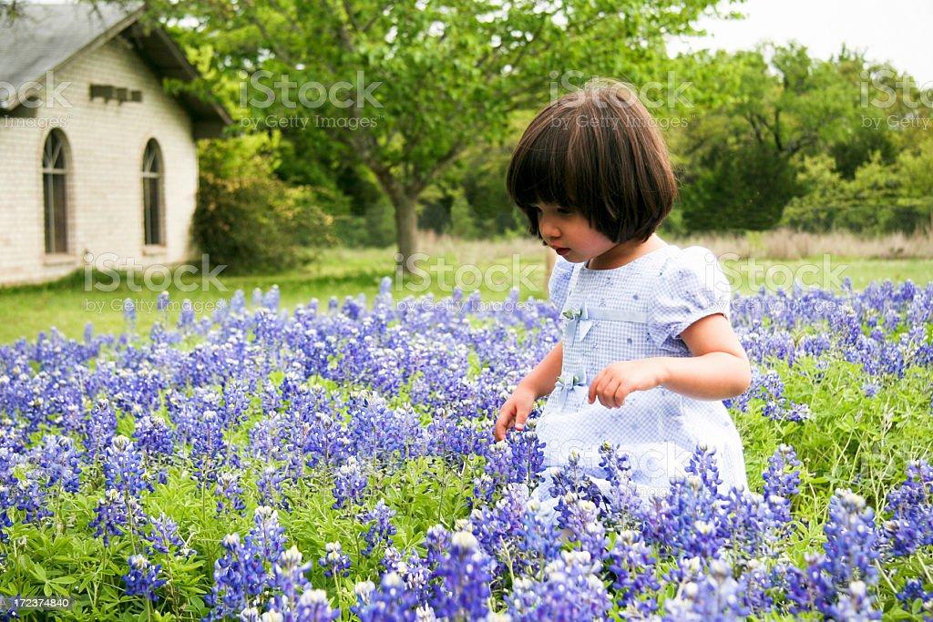 Bluebonnet Walk stock photo