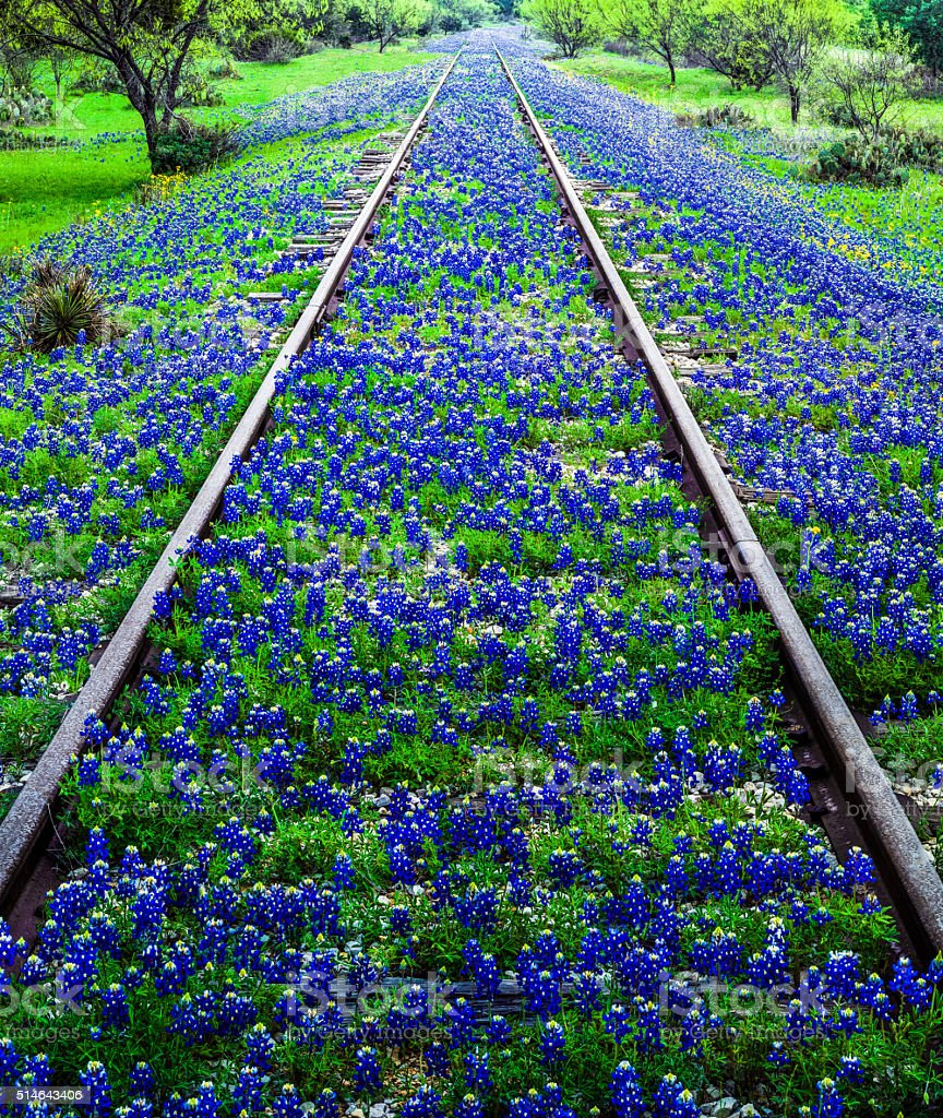 Bluebonnet wildflowers and old railroad track near Llano Texas stock photo