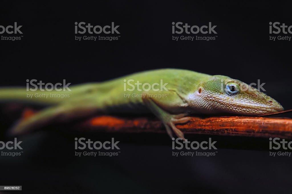 Blue-eyed Boy 免版稅 stock photo