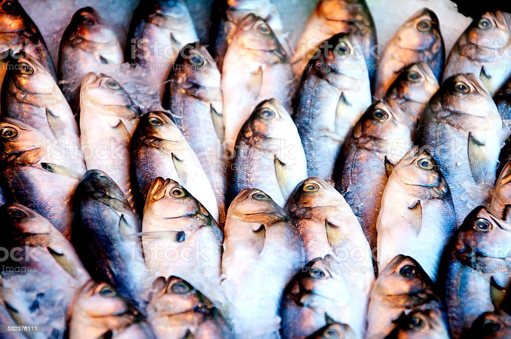 bluefish stock photo