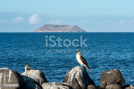 Peaceful panorama of the volcanic island Daphne with blue-footed gannets in the foreground