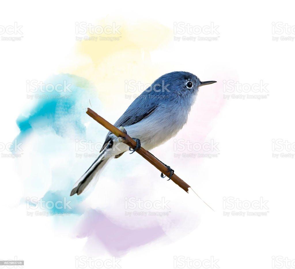 Blue-gray Gnatcatcher watercolor stock photo