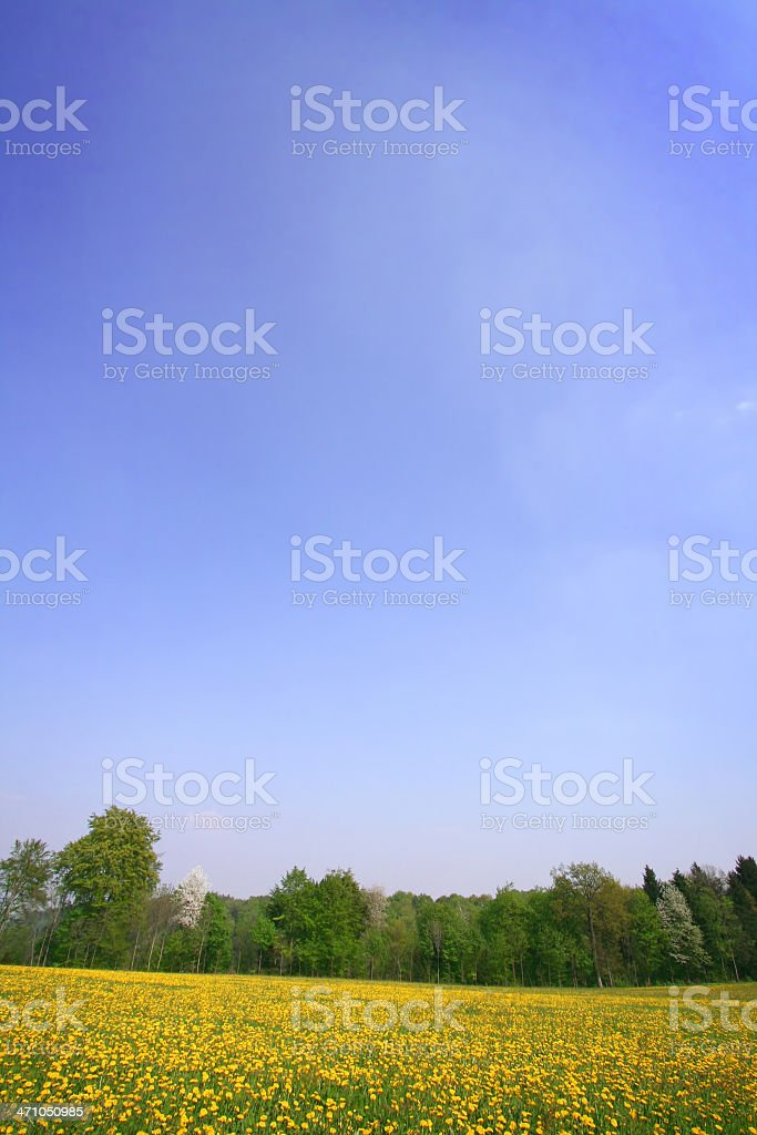 ' blues sky and meadow' with copyspace royalty-free stock photo