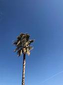 istock bluesky and tree 1311862494