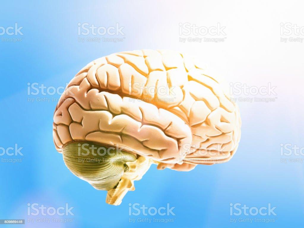 Bluesky Thinking Model Brain Floating In Sunny Air Stock Photo ...