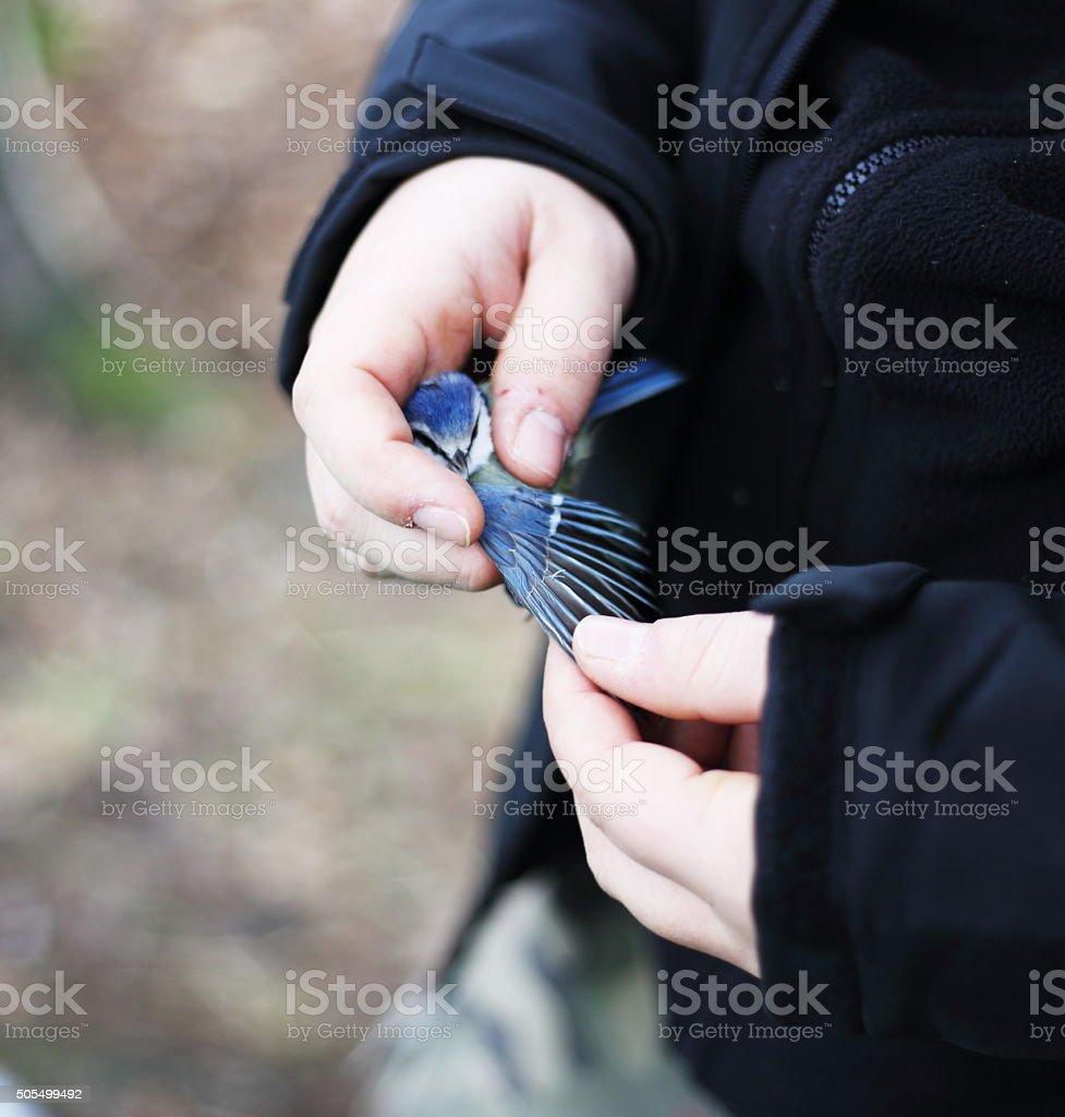 Bluetit royaltyfri bildbanksbilder