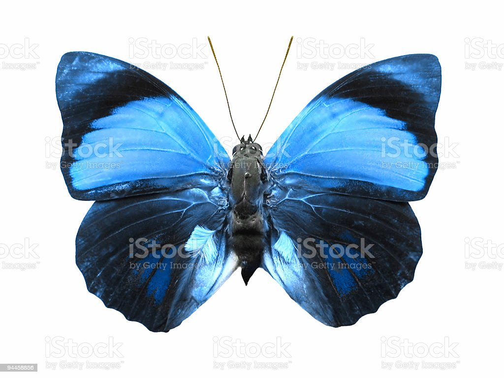 Bluish Butterfly royalty-free stock photo