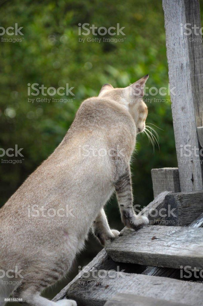 Bluish-gray colored cat stock photo